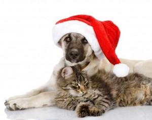 happy holidays happy holidays dog happy holidays