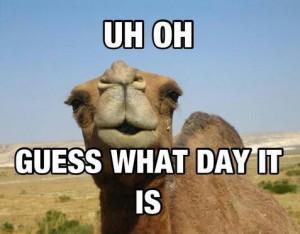 Geico Hump Day Camel Meme
