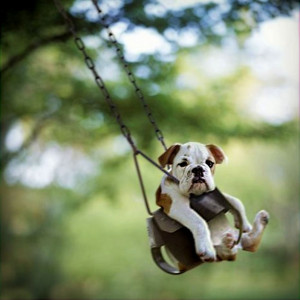 ... . Some of the best things in life are free. Quotes, animals, dogs