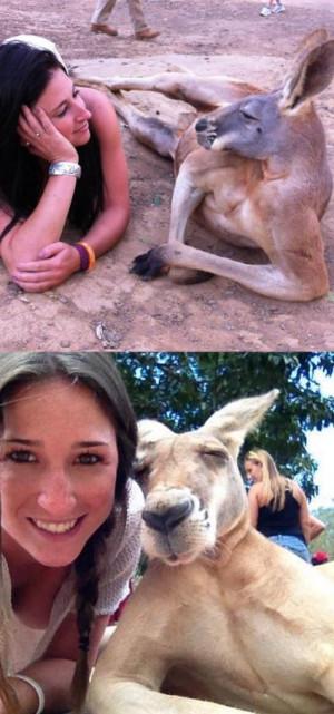 Extremely photogenic kangaroo