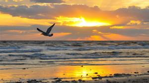 sunrise, wallpaper, beach, beaches, wallpapers, nature, collectpics ...