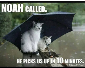 Too much rain!!!Funny Kitty, Rainy Day, Funny Cat, Funny Pictures ...