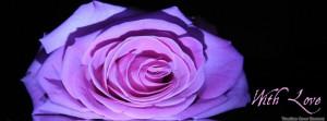 Purple roses timeline cover, Roses timeline cover banner