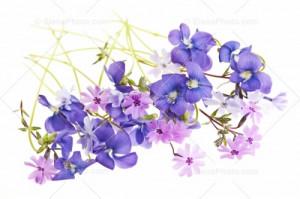 White Background Cut Flower