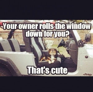 Jeep wrangler quotes / dogs
