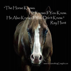 Horse pictures with quotes horse quotes