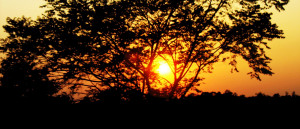 sunset through tree. The last photo is of the setting sun with three ...