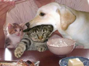 Imagenes] Animales divertidos