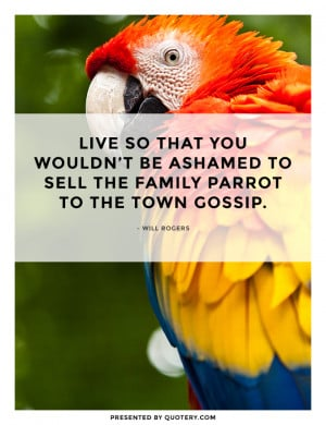 family-parrot-town-gossip