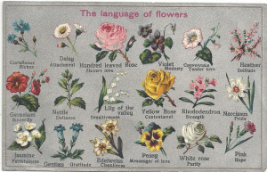 language of flowers, flower, meaning, symbolism, chart, victorian