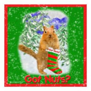 funny squirrel pictures funny squirrel nut videos funny squirrel ...