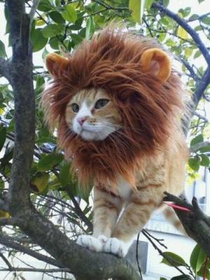 Raawrrrrr! Cutest lion ever!