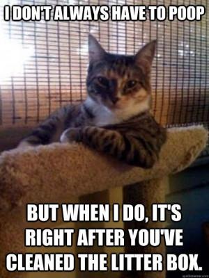 cat owner problems