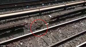 ... .co.ukNew York City subway kittens looking for a new home - Joe Lhota