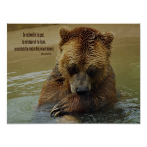 Grizzly Bear Inspirational Quotes