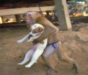 Worlds+Most+Funniest+Animal+Funny+Photo.jpg