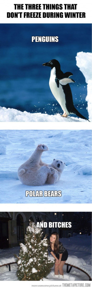 Funny photos funny penguins polar bears winter