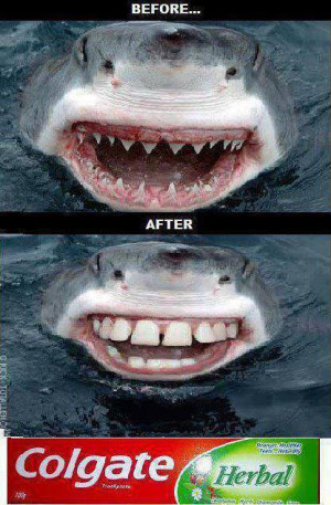 ... Details | Category: Funny Pictures // Tags: Funny shark // June, 2013