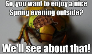 ... Bugs, Worst Things, Hilarious Things, Quotes Phras, Funny Stuff, Fun
