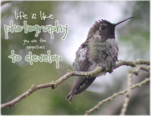 Hummingbird Quotes And Sayings