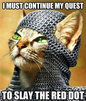 cat animal lolcat knight funny pic picture lol meme