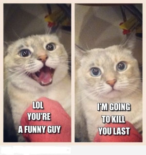 funny captions, animal memes, animal pictures with captions