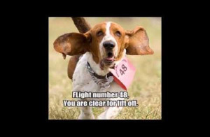 of funny dog quotes and sayings. It is always funny to see the dogs ...