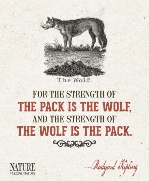 lone wolf quotes about strength lone wolf quote and tumblr lone wolf ...