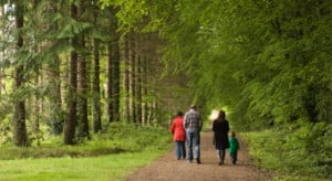 family or no family city or forest your external arrangements don t ...