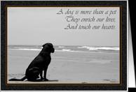Reflective Death Dog...