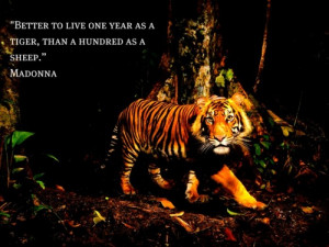 Better to live one year as a tiger, than a hundred as a sheep.