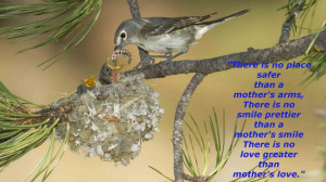 Mothers Day Quotes: Mother Bird Feeding Baby Birds