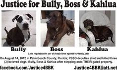 Petitioning The President of the United States Justice for Bully, Boss ...