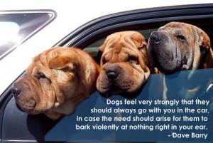Beautiful dog quotes for pinterest 1 c9b84dfa