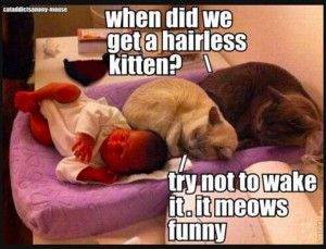 Funny Cats and Dogs (21 Pics)
