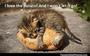 Funny image of a kitty who just loves his potato!