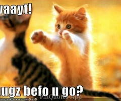 Tagged with hug cat quote sweet