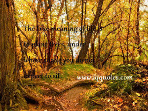 forest quotes (1)