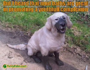 Funny Dog Picture Mud Baths Complexion