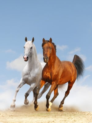 Galloping Horse Paintings...