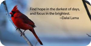 Red Cardinal Bird Meaning
