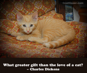 ... from the miseries of life are music and cats… ― Albert Schweitzer
