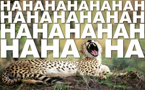 text animals quotes funny cheetahs Knowledge Quotes HD Wallpaper