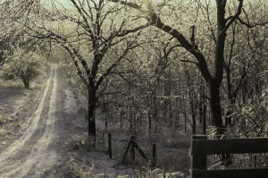cold ground makes you be so hard freezing rain freezing rain your ...