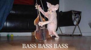 Bass - Cat Macro
