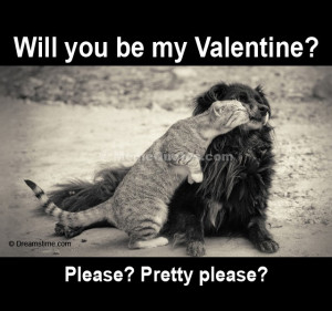 funny pictures kissing quotes tagged cat kiss dog kootation