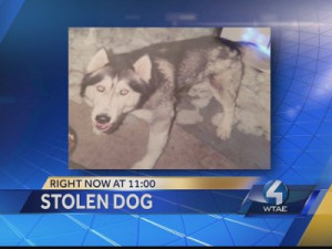 Police arrest woman accused of stealing dog from cancer-stricken owner