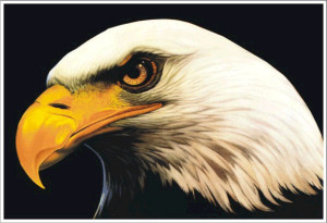 Bald Eagle Decal Decals