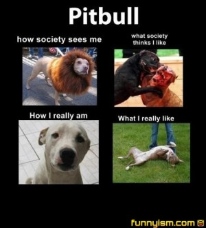 Famous Quotes About Pit Bulls Sweet dog quotes pitbulls