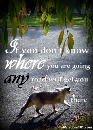 if you don't know where you're going-quote -cats-road
